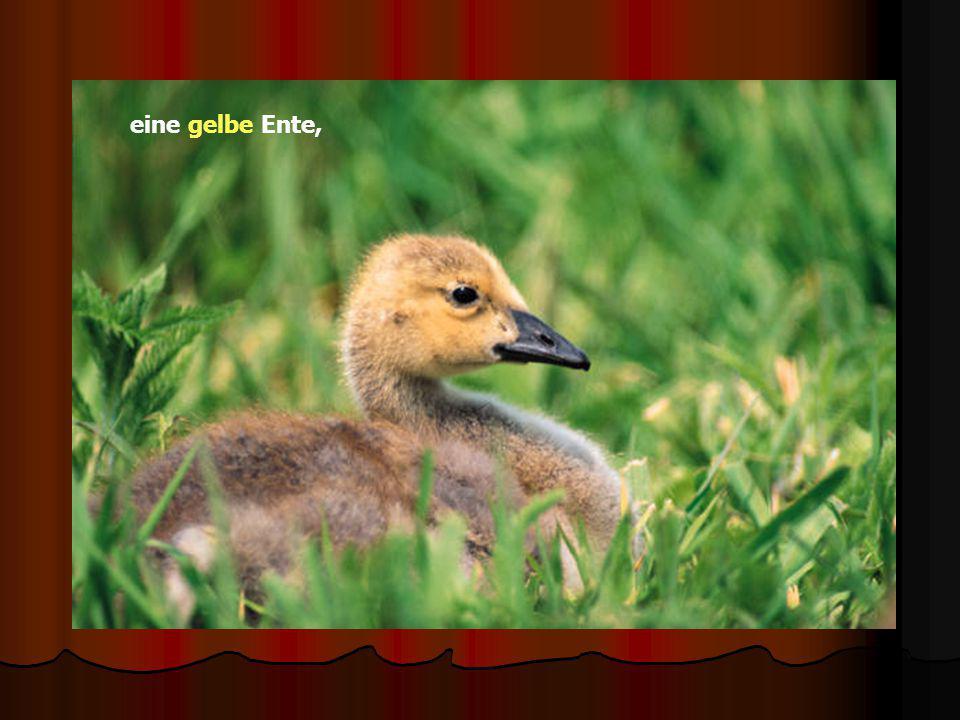eine gelbe Ente,