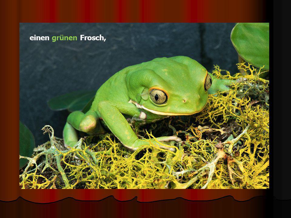einen grünen Frosch,