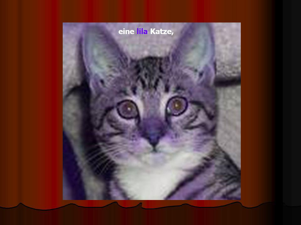 eine lila Katze,