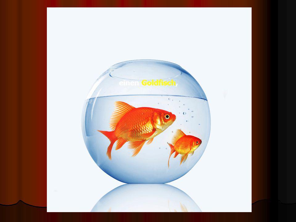 einen Goldfisch,