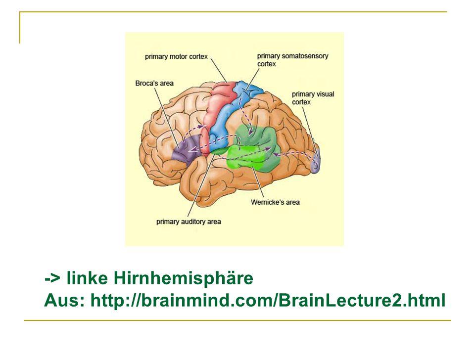 -> linke Hirnhemisphäre Aus: http://brainmind.com/BrainLecture2.html