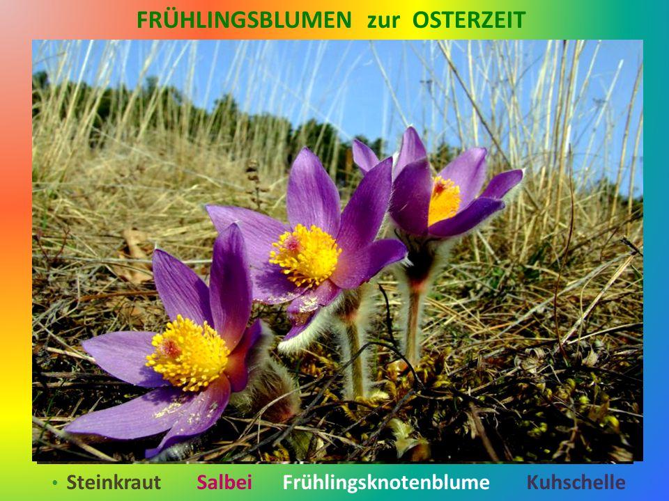 Läuft das Glück im Frühling rund Wäre das ein schöner Fund Ein Tütchen voller Zuversicht Mit einem Band aus Sonnenlicht