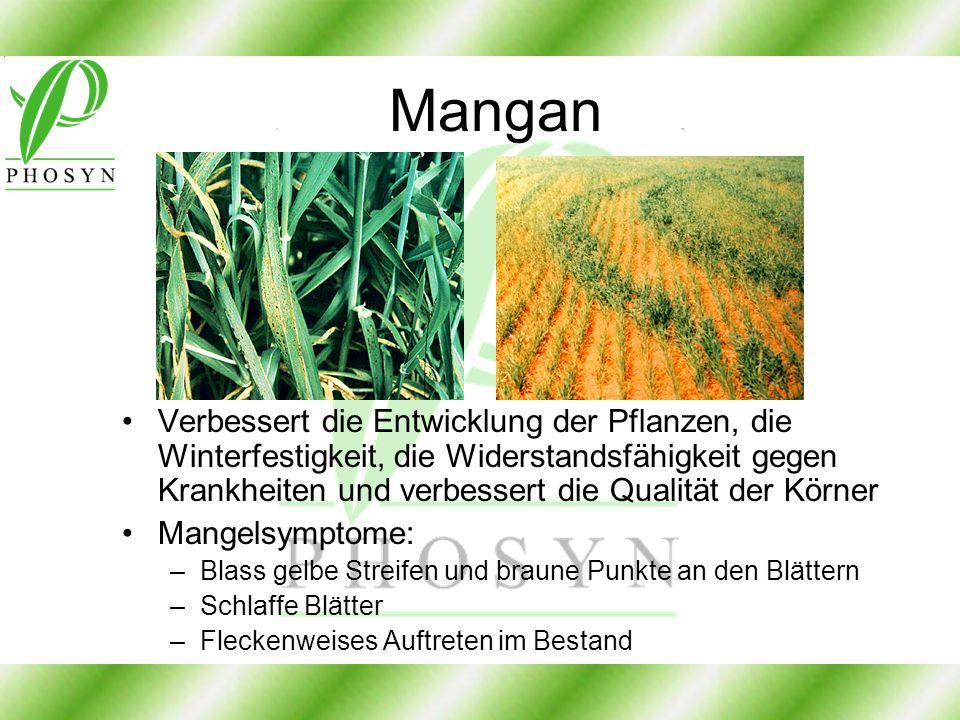 Mangan Verbessert die Entwicklung der Pflanzen, die Winterfestigkeit, die Widerstandsfähigkeit gegen Krankheiten und verbessert die Qualität der Körne