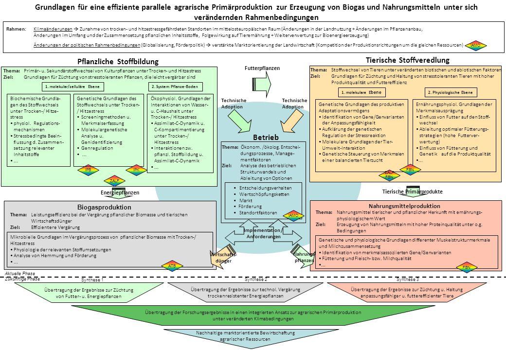Grundlagen für eine effiziente parallele agrarische Primärproduktion zur Erzeugung von Biogas und Nahrungsmitteln unter sich verändernden Rahmenbeding