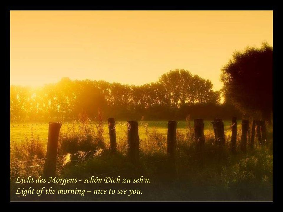 Licht des Morgens - schön Dich zu seh n. Light of the morning – nice to see you.