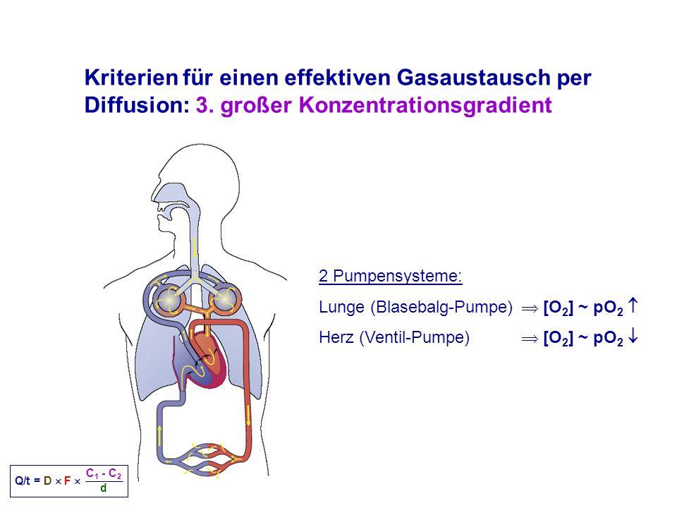 Kriterien für einen effektiven Gasaustausch per Diffusion: 3.