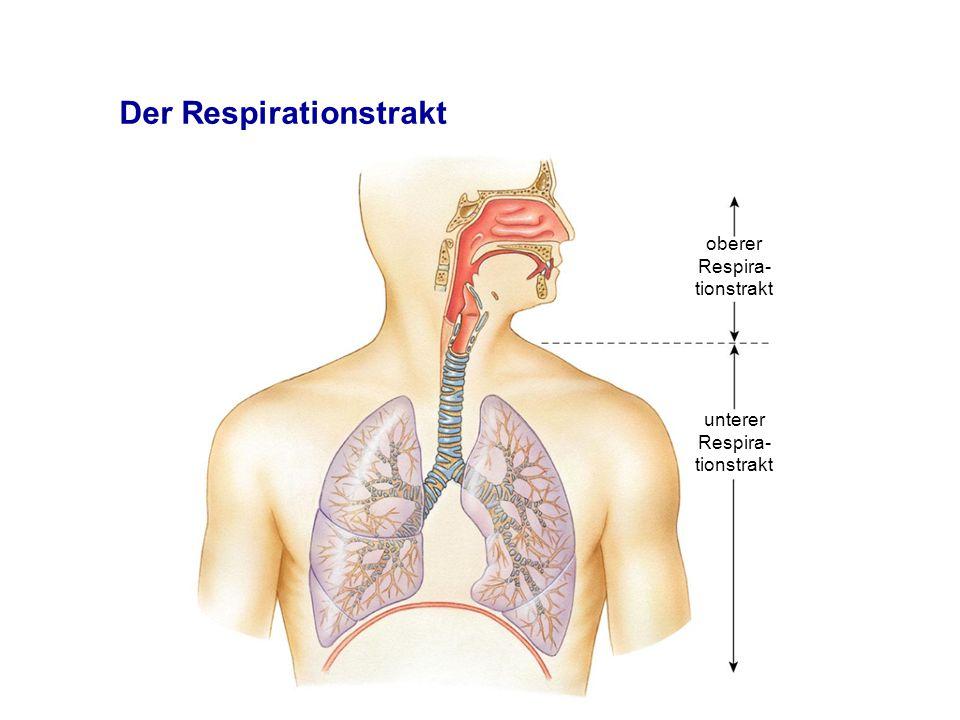 Der Respirationstrakt oberer Respira- tionstrakt unterer Respira- tionstrakt