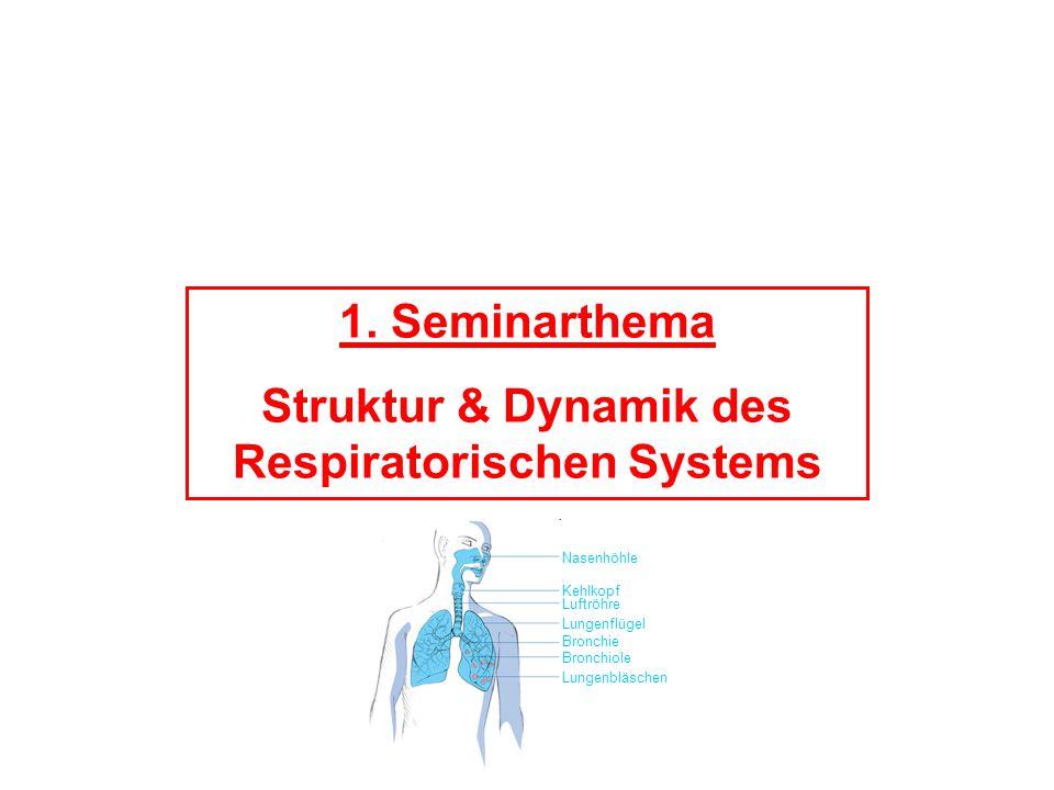 1. Seminarthema Struktur & Dynamik des Respiratorischen Systems Nasenhöhle Kehlkopf Luftröhre Lungenflügel Bronchie Bronchiole Lungenbläschen
