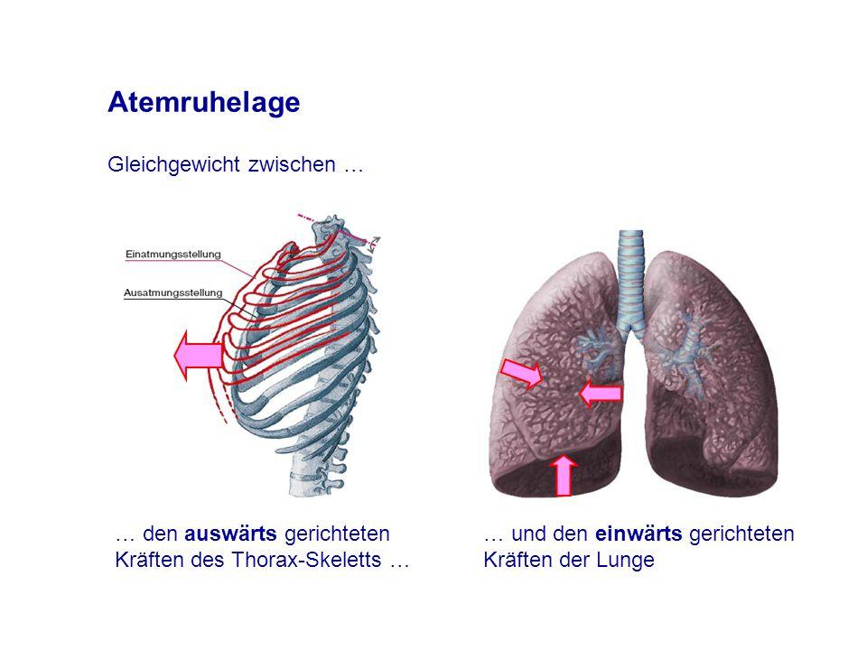 Atemruhelage … den auswärts gerichteten Kräften des Thorax-Skeletts … Gleichgewicht zwischen … … und den einwärts gerichteten Kräften der Lunge