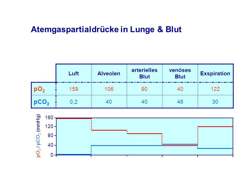 Atemgaspartialdrücke in Lunge & Blut LuftAlveolen arterielles Blut venöses Blut Exspiration pO 2 1591069040122 pCO 2 0,240 4630 160 120 80 40 0 pO 2 / pCO 2 (mmHg)
