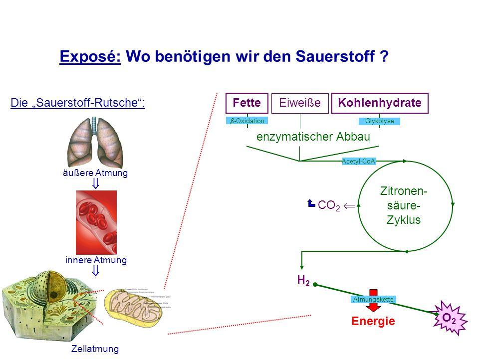 Exposé: Wo benötigen wir den Sauerstoff .