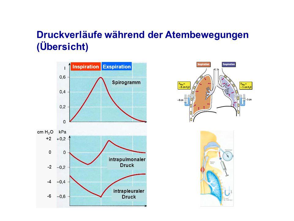 Druckverläufe während der Atembewegungen (Übersicht) intrapulmonaler Druck intrapleuraler Druck Spirogramm Inspiration Exspiration +2 0 -2 -4 -6 cm H 2 O
