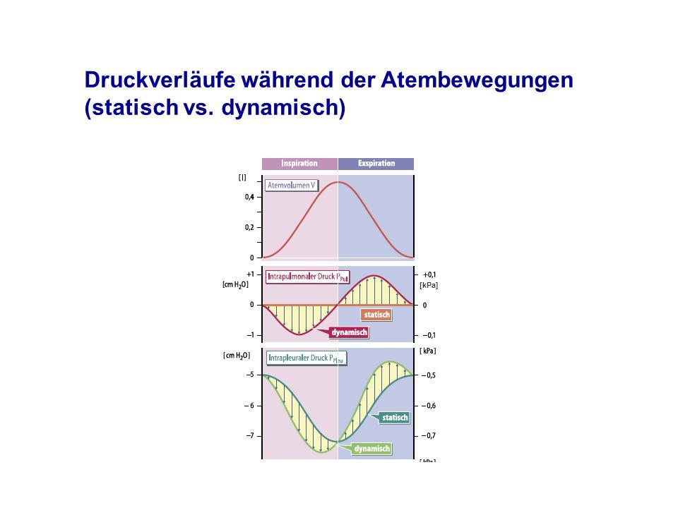[kPa] Druckverläufe während der Atembewegungen (statisch vs. dynamisch)