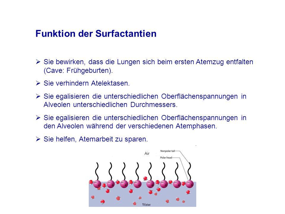 Funktion der Surfactantien  Sie bewirken, dass die Lungen sich beim ersten Atemzug entfalten (Cave: Frühgeburten).
