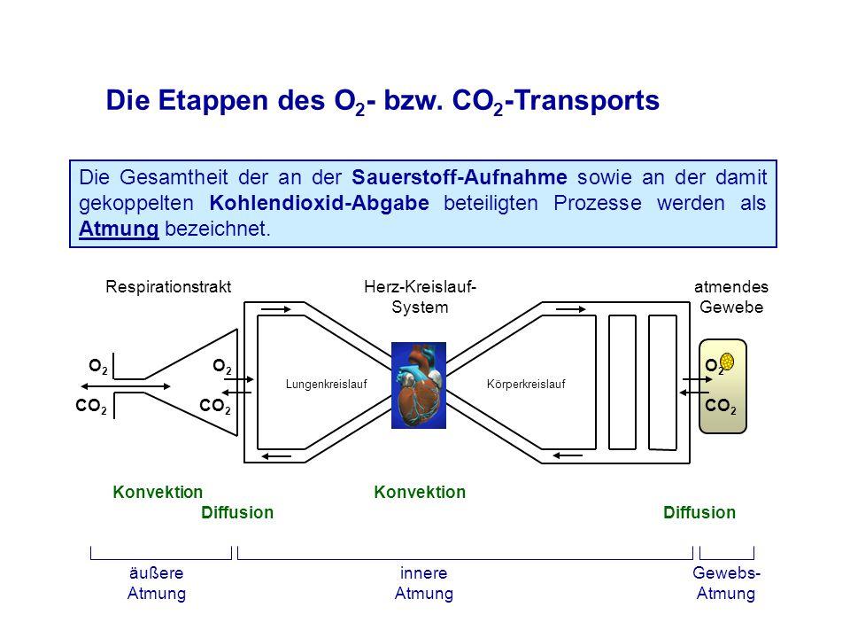 """Atemgasfraktionen und -partialdrücke in der Gasphase (ohne Wasserdampf [6,2% bei 37°C und 100% Sättigung {47 mmHg pH 2 O}]) - Luft20,93% O 2 159 mmHg pO 2 0,03% CO 2 0,2 mmHg pCO 2 79,04% """"N 2 600 mmHg pN 2 (davon ca."""
