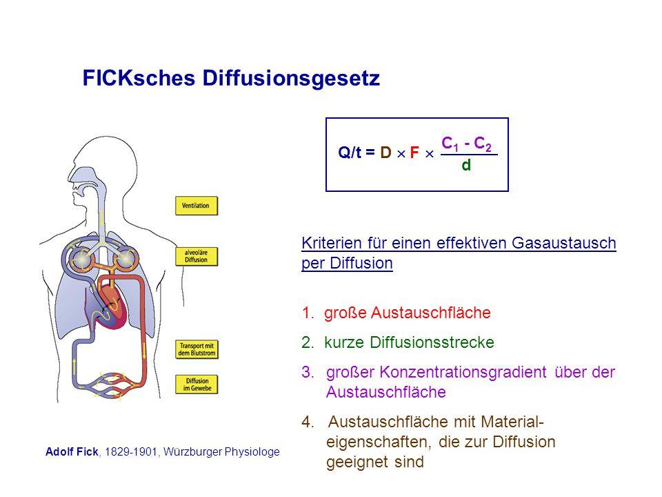 FICKsches Diffusionsgesetz Q/t = D  F  C 1 - C 2 d 1.