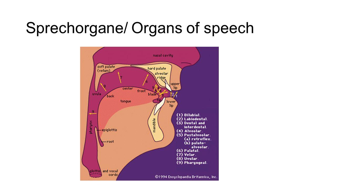 Vokale- Zungenhoehe