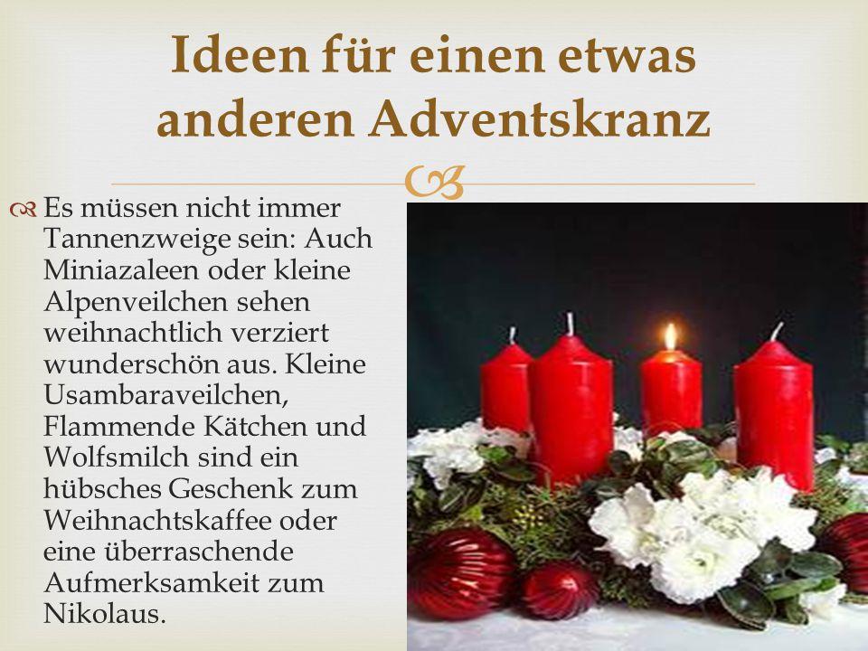   Es müssen nicht immer Tannenzweige sein: Auch Miniazaleen oder kleine Alpenveilchen sehen weihnachtlich verziert wunderschön aus.