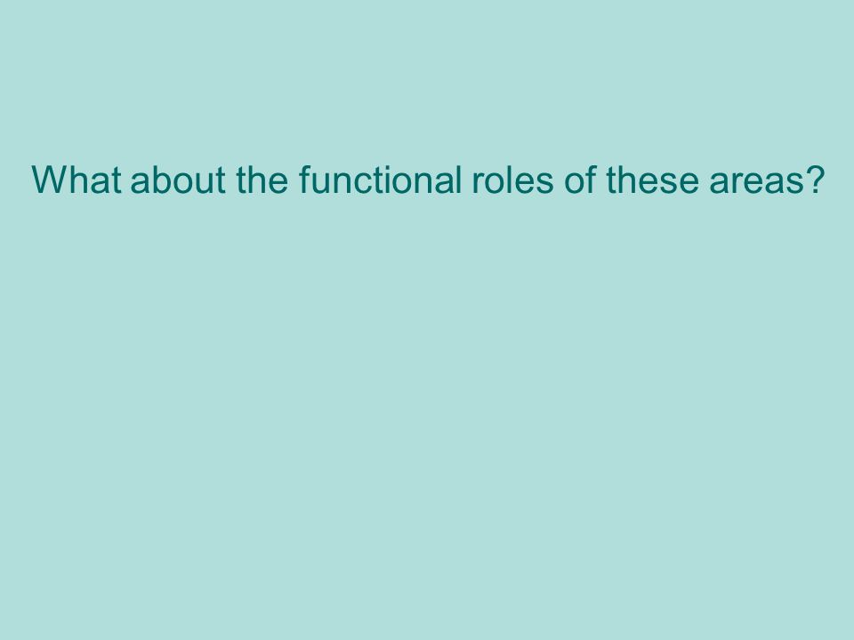 What about the functional roles of these areas?