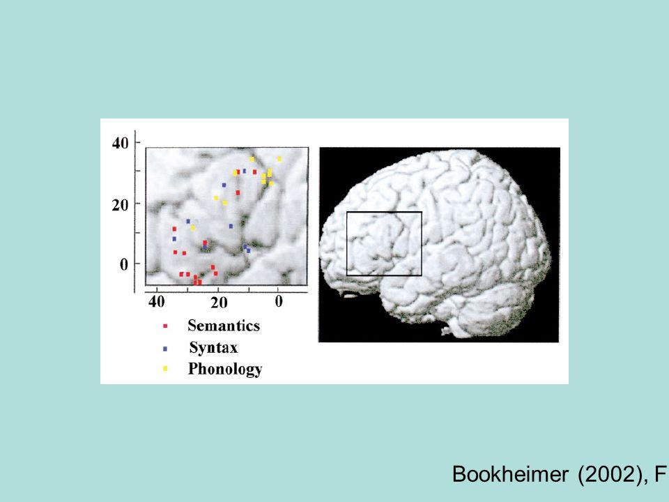 Bookheimer (2002), Fig. 2