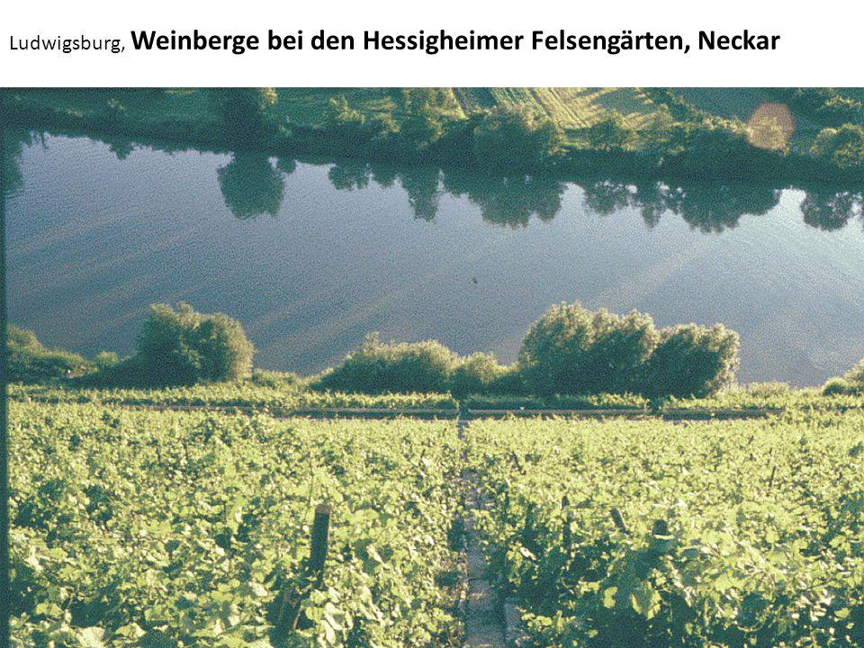 Ludwigsburg, Weinberge bei den Hessigheimer Felsengärten, Neckar
