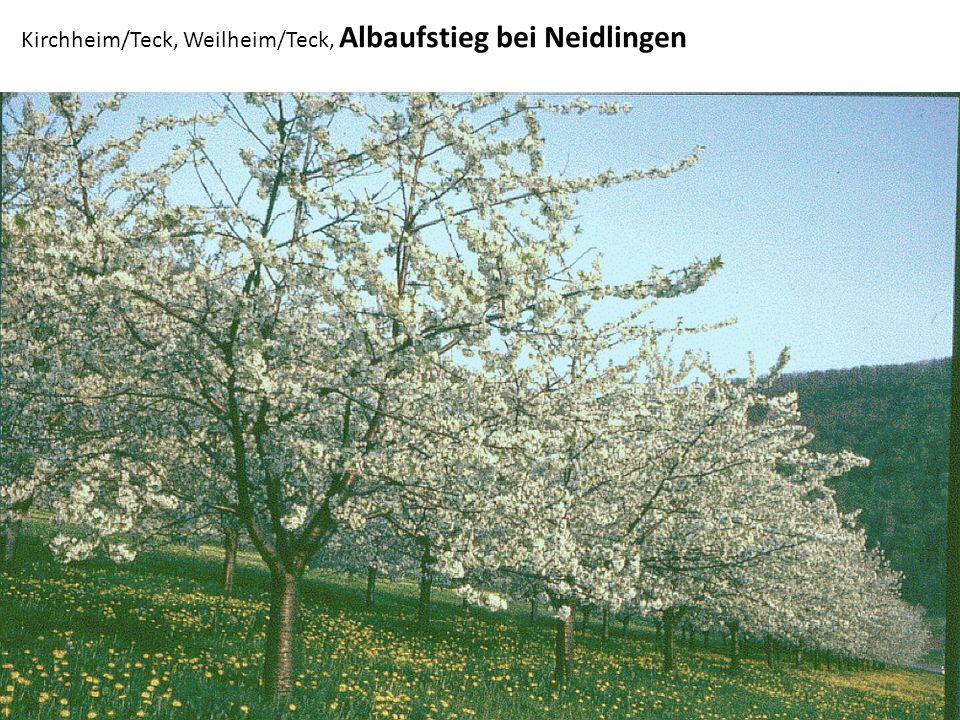 Sigmaringen, Oberes Donautal, Talstraße bei Gutenstein/ Dietfurth, Ruine Gebrochen- Gutenstein