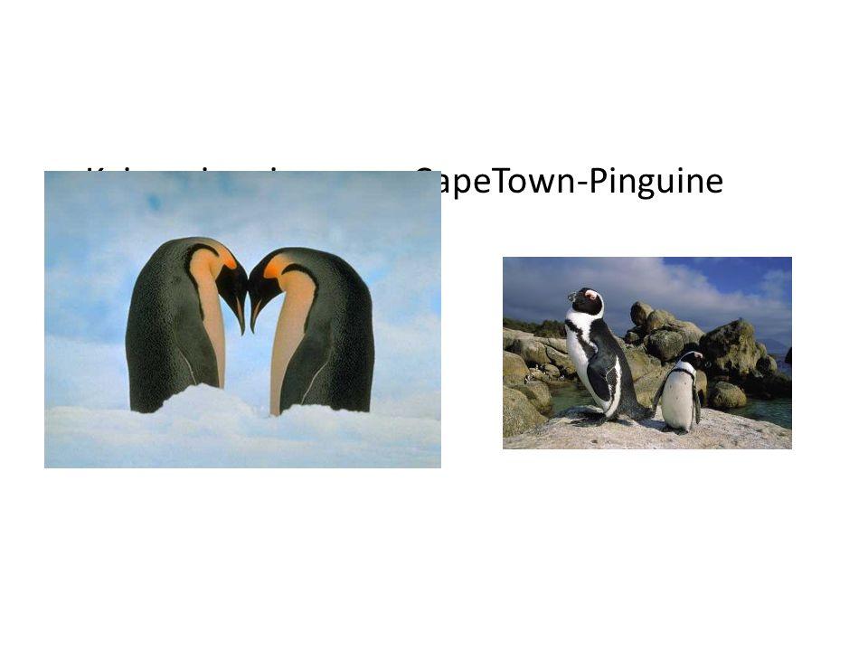 Kaiserpinguine CapeTown-Pinguine