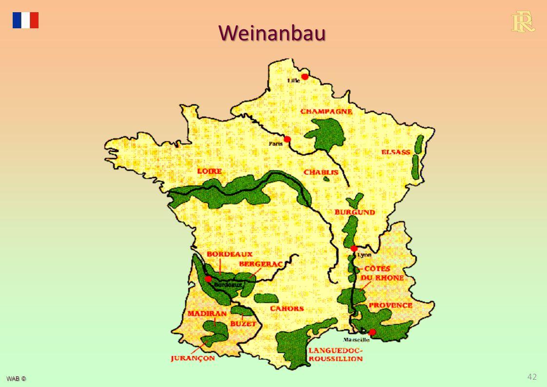 WAB © Weinanbau 42