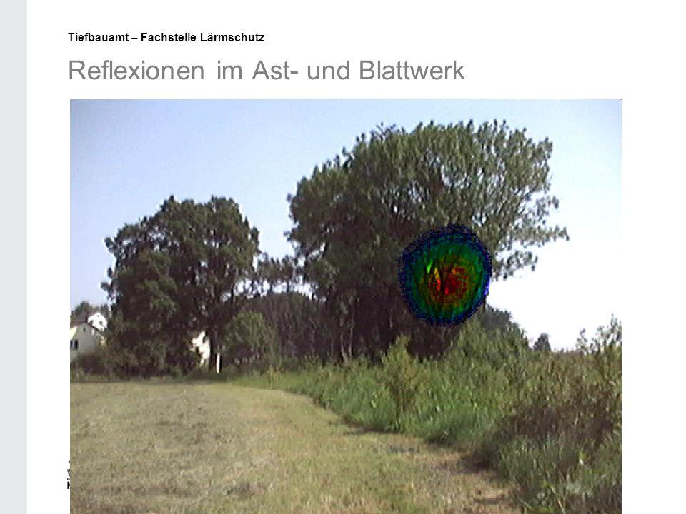 Reflexionen im Ast- und Blattwerk Tiefbauamt – Fachstelle Lärmschutz