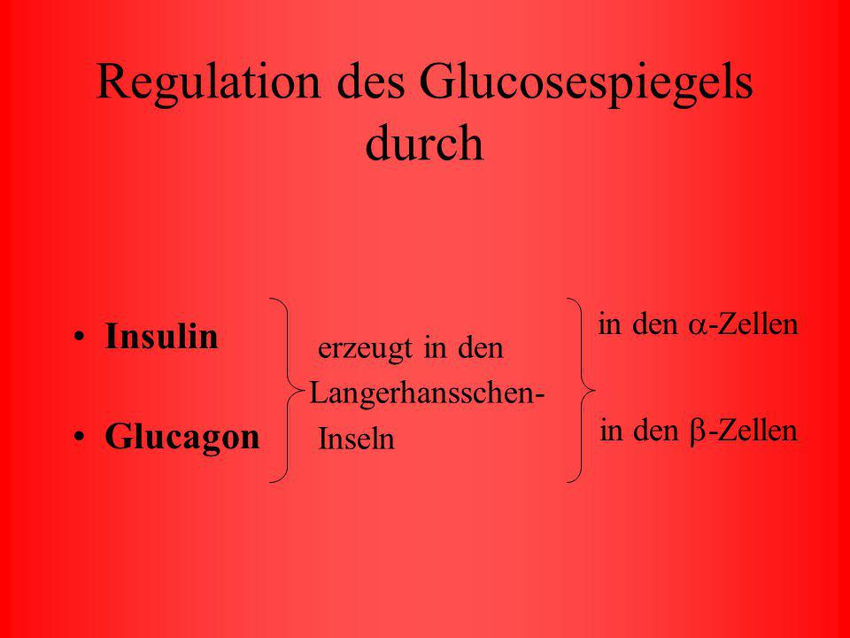 Glucose Traubenzucker Organe zur Blutzuckerregulierung: Bauchspeicheldrüse Leber Muskelzellen