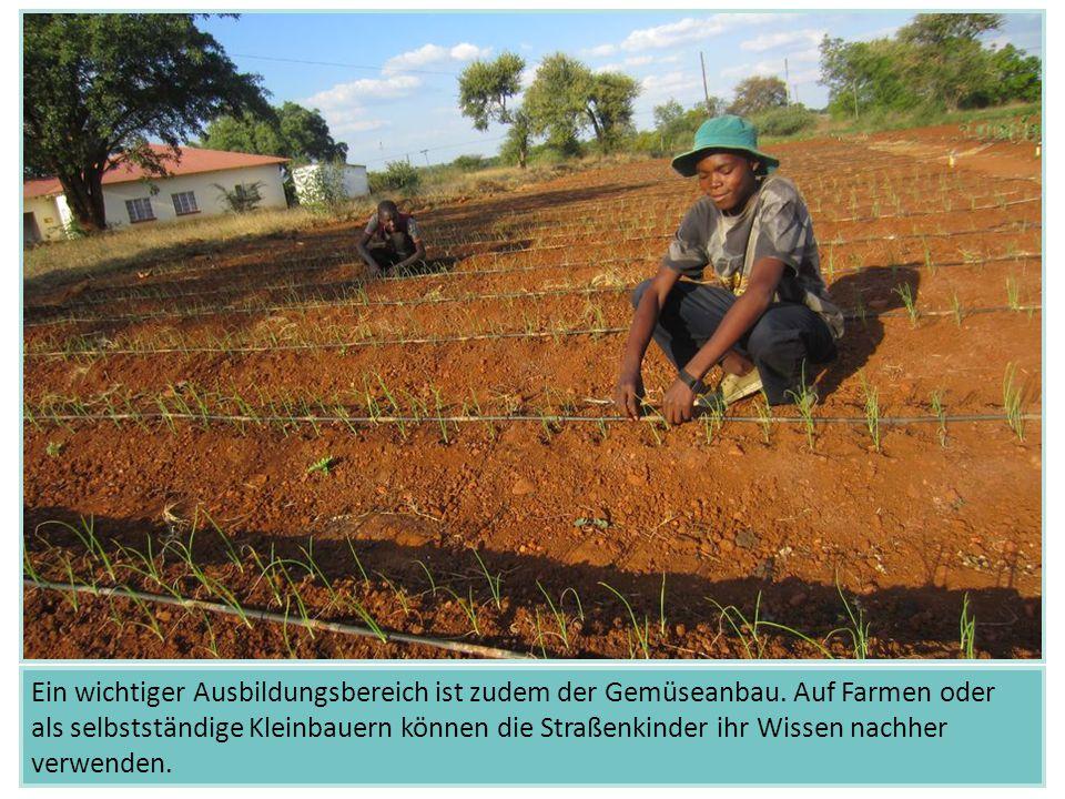 Ein wichtiger Ausbildungsbereich ist zudem der Gemüseanbau. Auf Farmen oder als selbstständige Kleinbauern können die Straßenkinder ihr Wissen nachher
