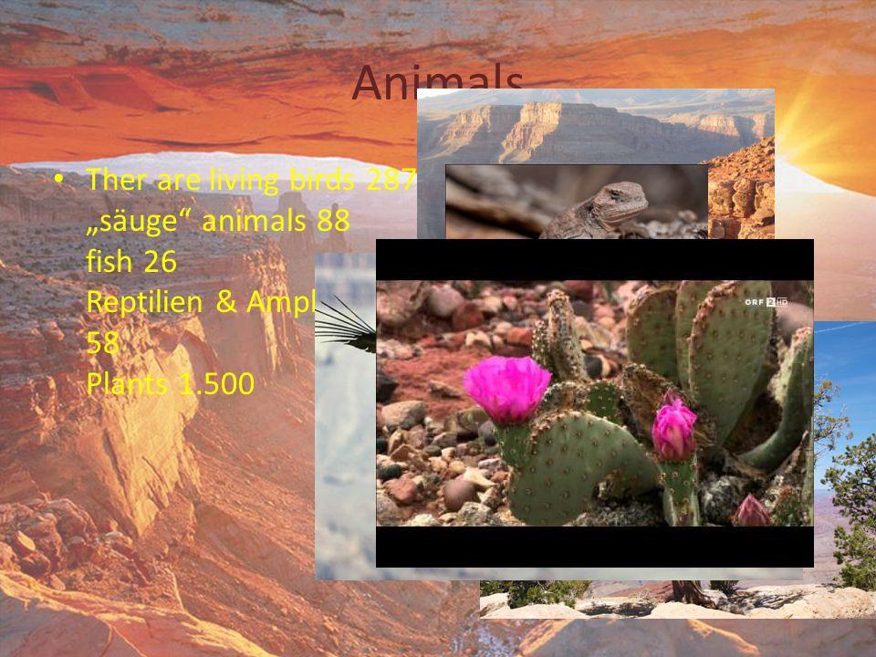 "Animals Ther are living birds 287 ""säuge"" animals 88 fish 26 Reptilien & Amphibien 58 Plants 1.500"
