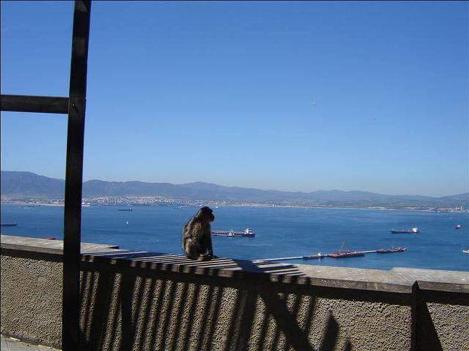 Parking reserved for Monkeys Parken für Affen reserviert Parken für Affen reserviert...............................