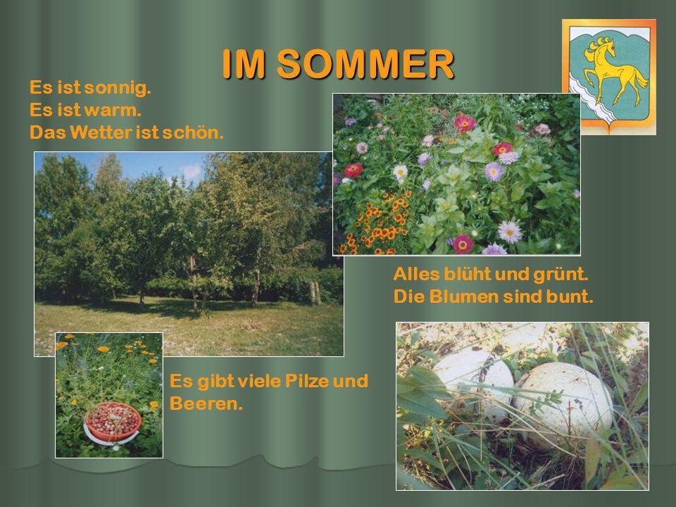 IM SOMMER Es ist sonnig. Es ist warm. Das Wetter ist schön. Alles blüht und grünt. Die Blumen sind bunt. Es gibt viele Pilze und Beeren.