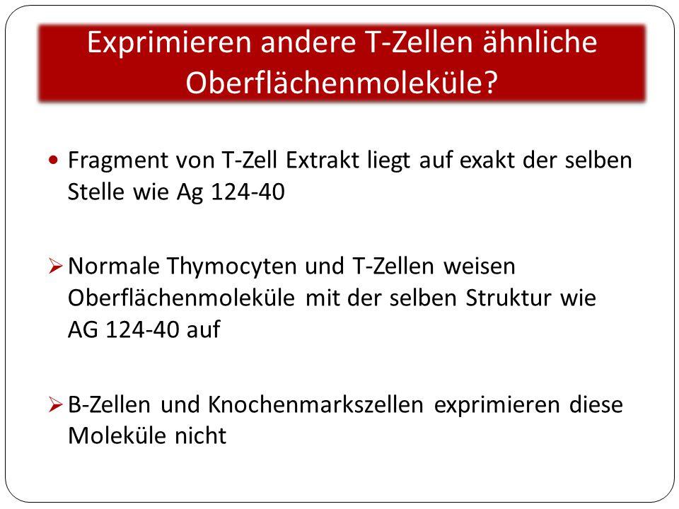 Exprimieren andere T-Zellen ähnliche Oberflächenmoleküle? Fragment von T-Zell Extrakt liegt auf exakt der selben Stelle wie Ag 124-40  Normale Thymoc