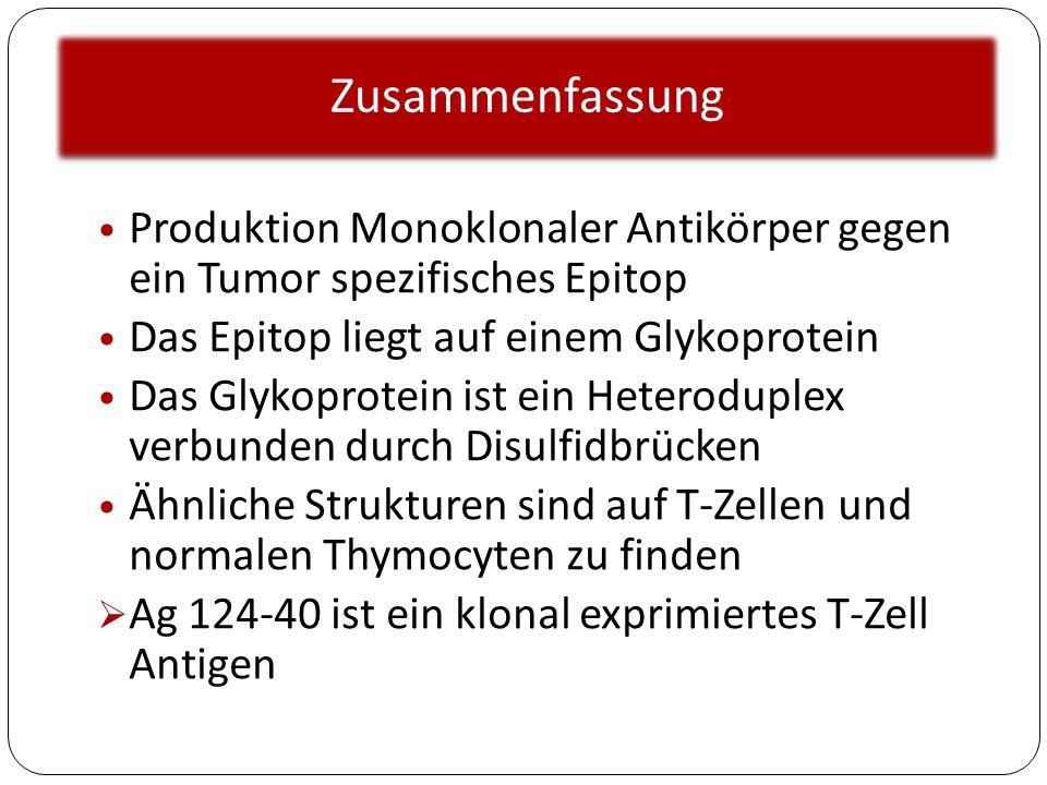 Zusammenfassung Produktion Monoklonaler Antikörper gegen ein Tumor spezifisches Epitop Das Epitop liegt auf einem Glykoprotein Das Glykoprotein ist ei