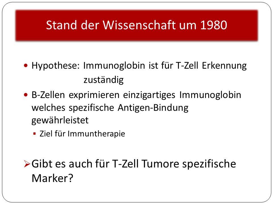 Stand der Wissenschaft um 1980 Hypothese: Immunoglobin ist für T-Zell Erkennung zuständig B-Zellen exprimieren einzigartiges Immunoglobin welches spez