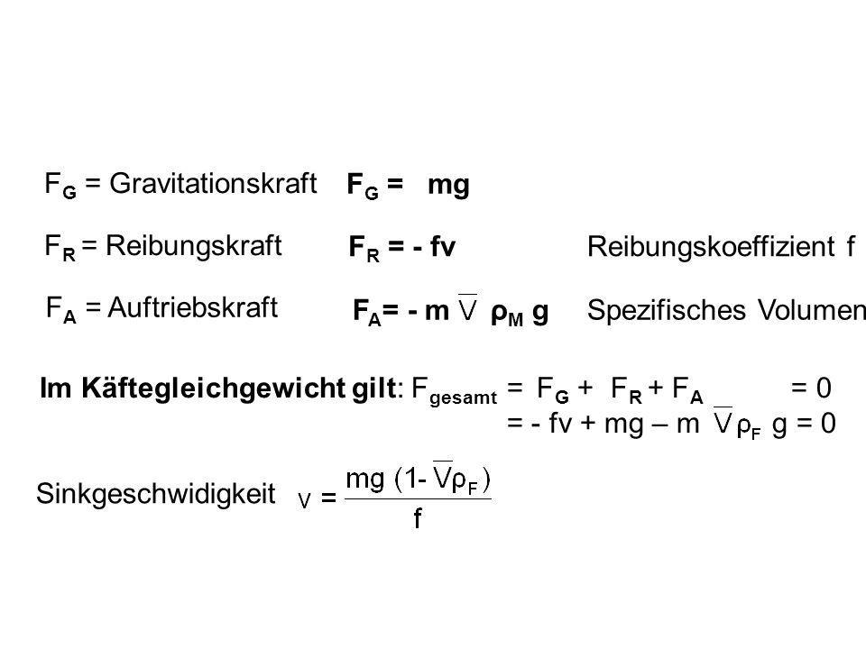 F R = Reibungskraft F G = Gravitationskraft F A = Auftriebskraft F A = - m ρ M g F R = - fv F G = mg Im Käftegleichgewicht gilt: F gesamt = F G + F R