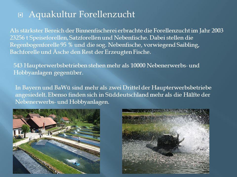  Aquakultur Forellenzucht Als stärkster Bereich der Binnenfischerei erbrachte die Forellenzucht im Jahr 2003 23256 t Speiseforellen, Satzforellen und
