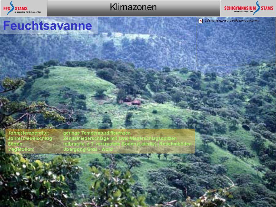Klimazonen Ein Überblick24 Tropischer Regenwald Jahrestemperatur: keine Jahreszeiten Jahresniederschlag: ganzjährig feucht mit zwei Niederschlagsspitzen Böden: Rotlehm Vegetation: tropischer Regenwald Kamerun
