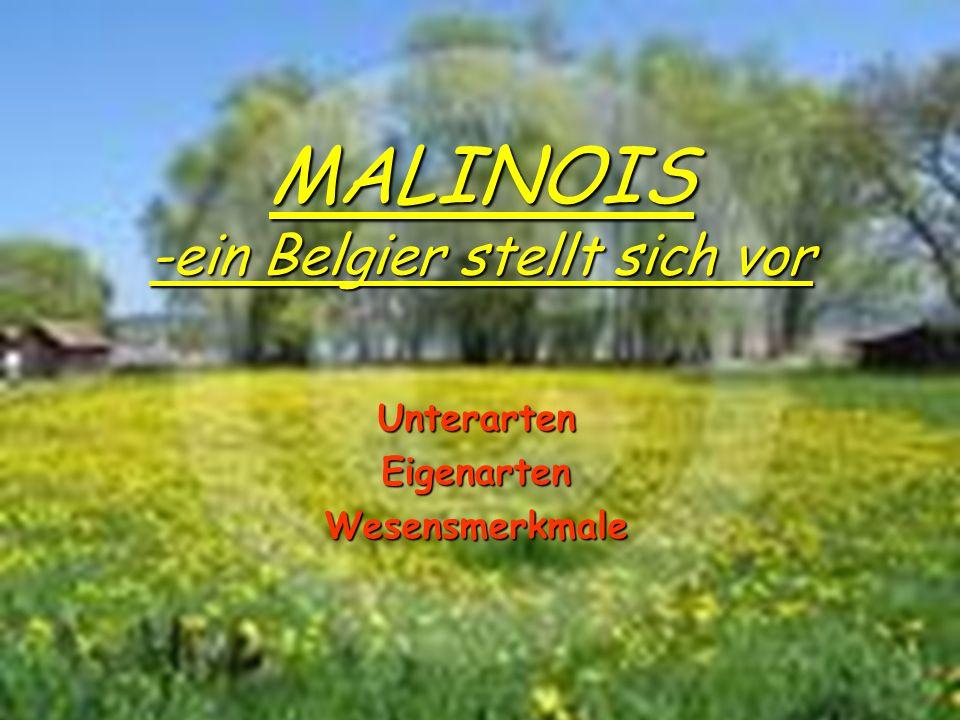 Unterarten Eigenarten Wesensmerkmale MALINOIS -ein Belgier stellt sich vor