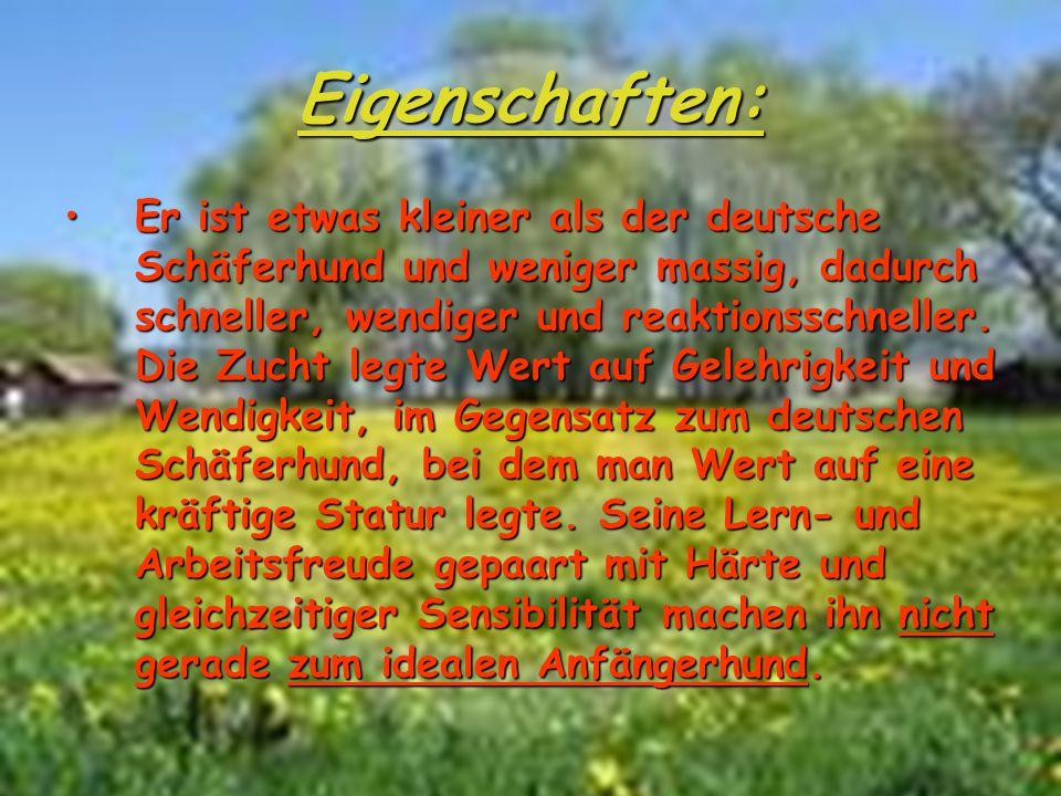 Eigenschaften: ErEr ist etwas kleiner als der deutsche Schäferhund und weniger massig, dadurch schneller, wendiger und reaktionsschneller. Die Zucht l