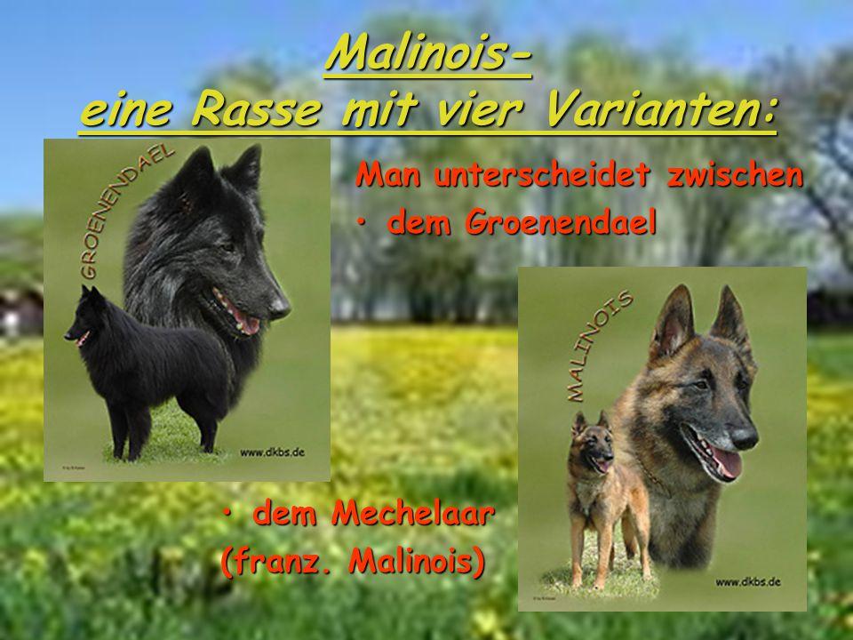 Man unterscheidet zwischen dem Groenendael dem Mechelaardem Mechelaar (franz. Malinois) Malinois- eine Rasse mit vier Varianten: