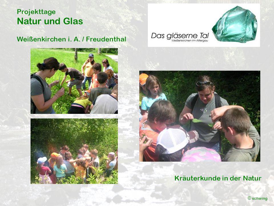 Projekttage Natur und Glas Weißenkirchen i. A. / Freudenthal © schwing Kräuterkunde in der Natur