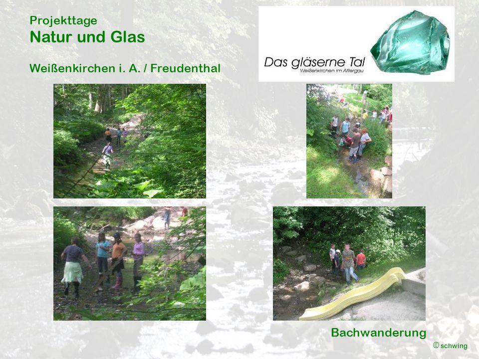 Projekttage Natur und Glas Weißenkirchen i. A. / Freudenthal © schwing Bachwanderung