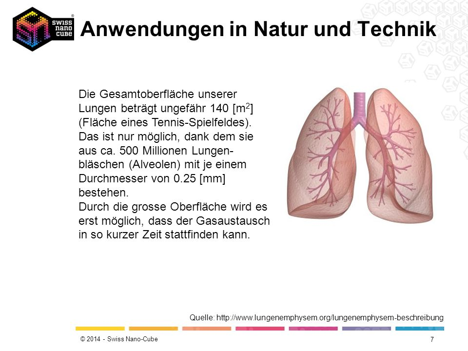 © 2014 - Swiss Nano-Cube Anwendungen in Natur und Technik 7 Die Gesamtoberfläche unserer Lungen beträgt ungefähr 140 [m 2 ] (Fläche eines Tennis-Spiel