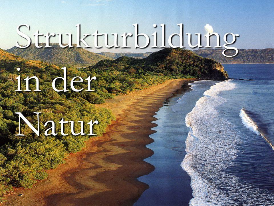 Titelbild Strukturbildung in der Natur