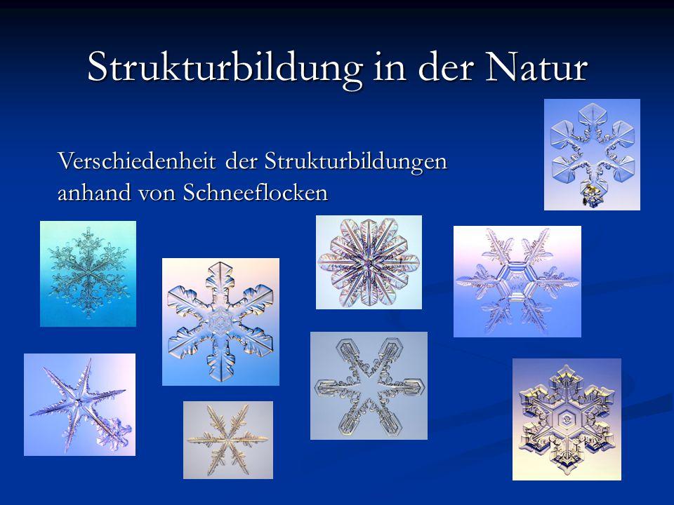 Verschiedenheit der Strukturbildungen anhand von Schneeflocken Strukturbildung in der Natur Schneeflocken