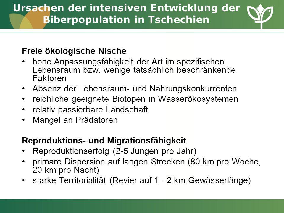 Ursachen der intensiven Entwicklung der Biberpopulation in Tschechien Freie ökologische Nische hohe Anpassungsfähigkeit der Art im spezifischen Lebens