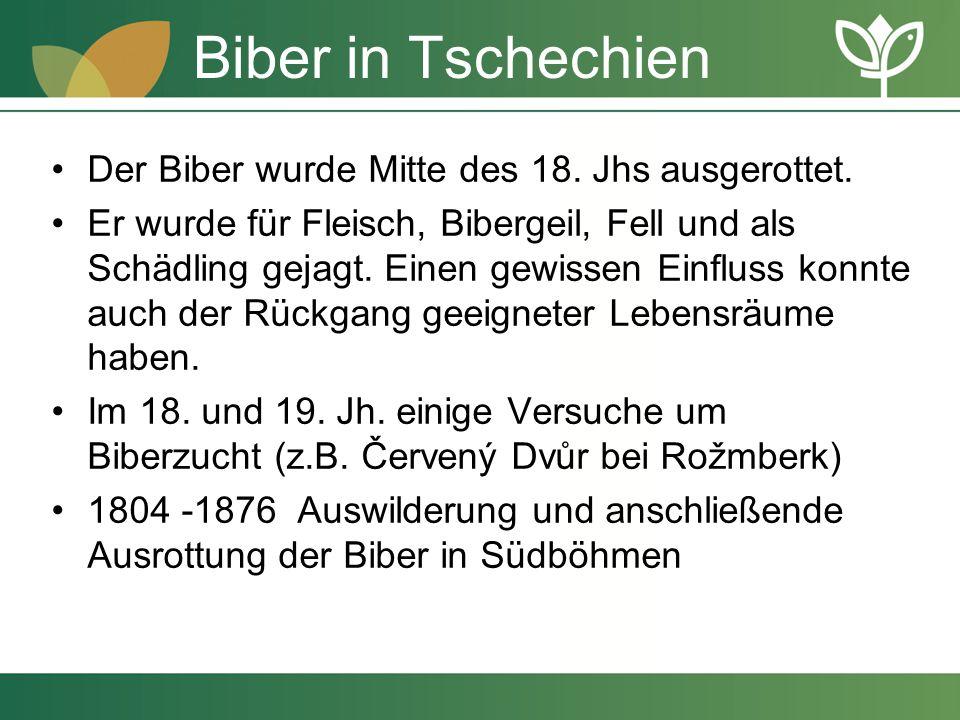 Biber in Tschechien Der Biber wurde Mitte des 18. Jhs ausgerottet. Er wurde für Fleisch, Bibergeil, Fell und als Schädling gejagt. Einen gewissen Einf